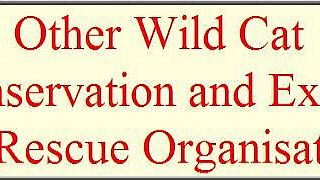 Other Wild Cat Conservation and Exotic Cat Rescue Organisations